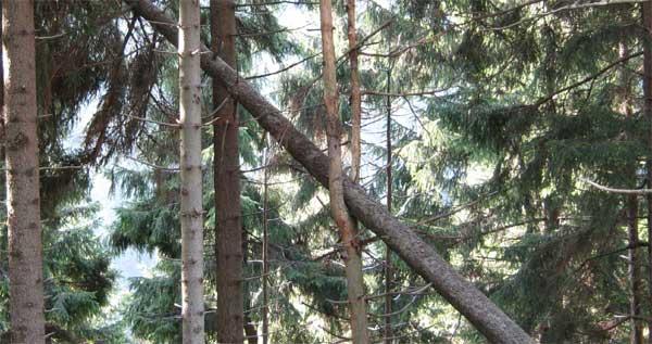 baumfaengtbaum