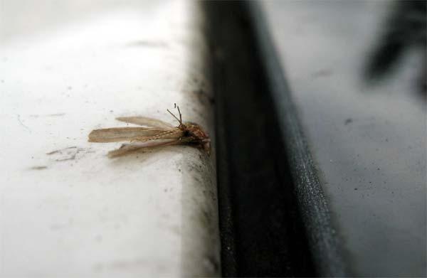 gestrandetes insekt